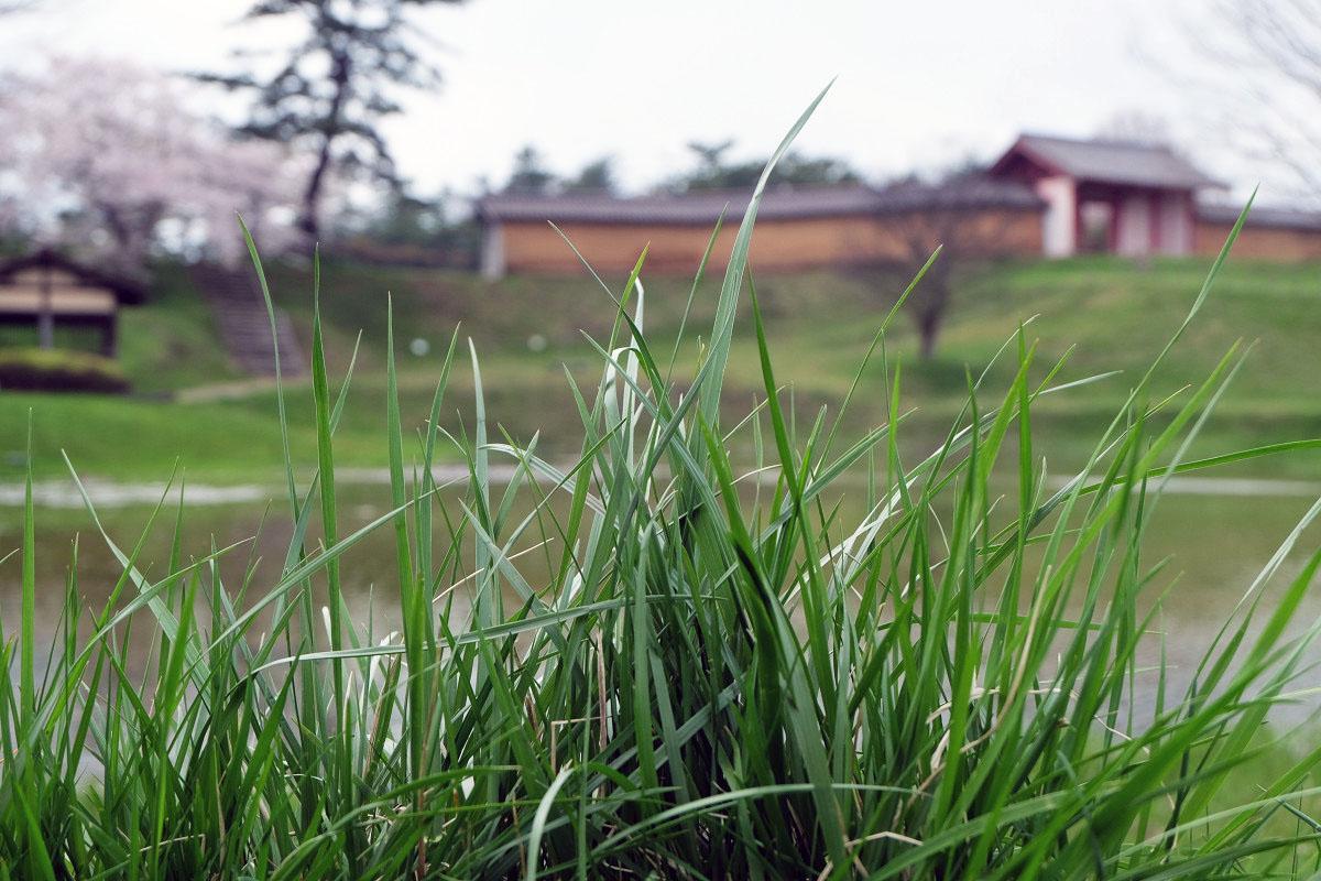 「草」の意味は?ネットで使われている草を解説