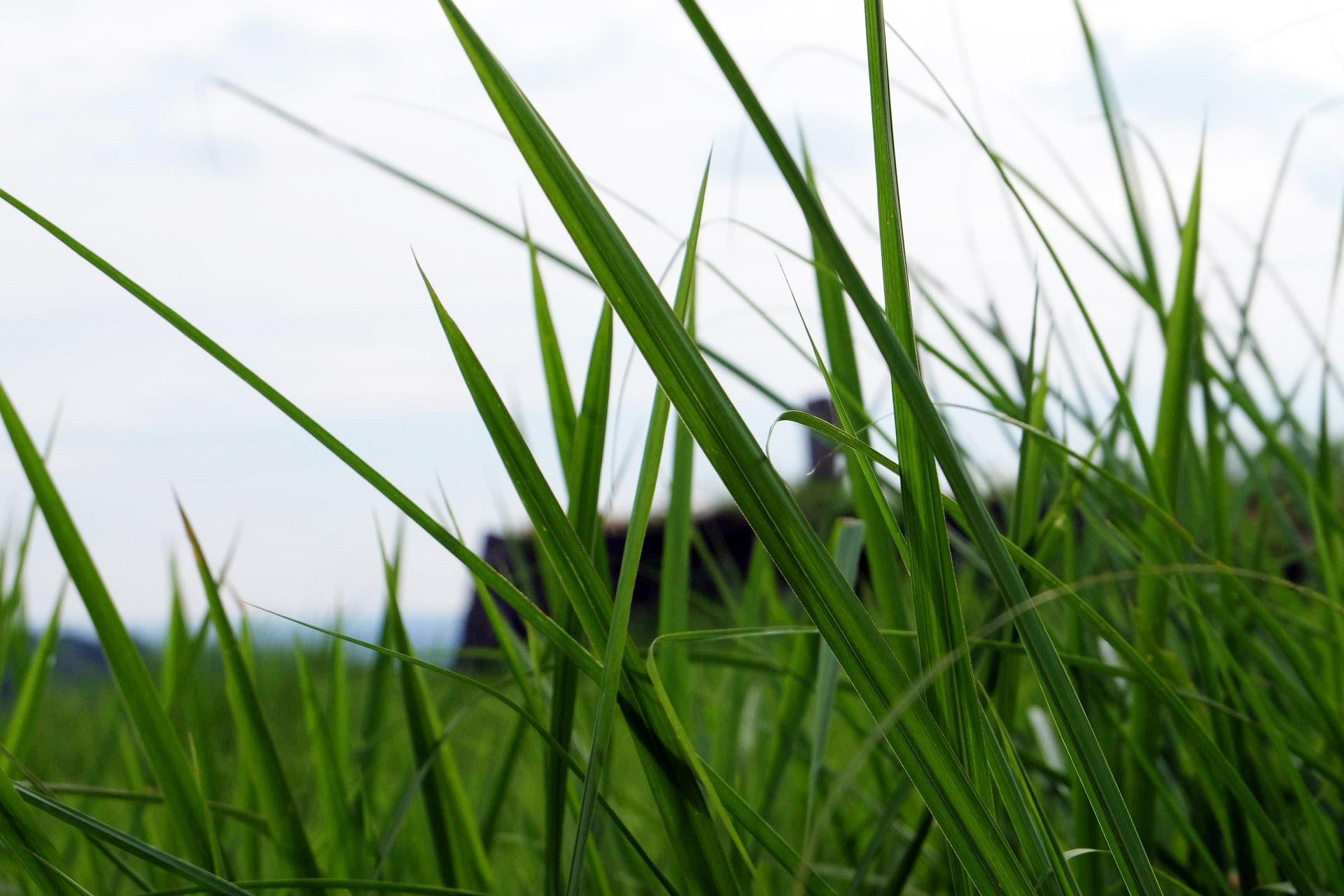 「草」の写真